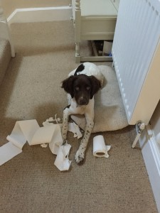 Doris - how did she get on here! Whoops, she thinks she's the Andrex puppy :)